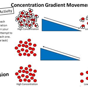 What's Concentration gradient?
